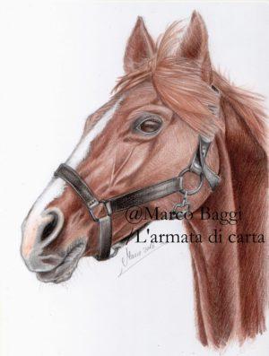 Il cavallo - The horse